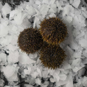 Sea Urchin - fishtoyourdoor - UK FISH DELIVERY