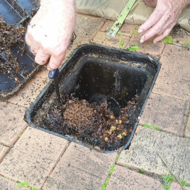 Native Bee Rescue Brisbane | Native Bee Removal Ipswich | Logan | Found Native Bee Hive
