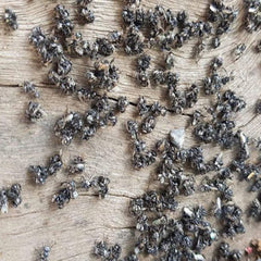 native bees fighting swarm