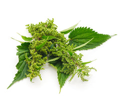 Urtica Dioica (Nettle) Extract