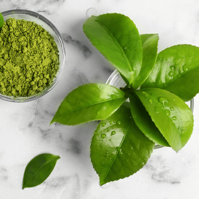 Camellia Sinensis Leaf Extract (Green tea)
