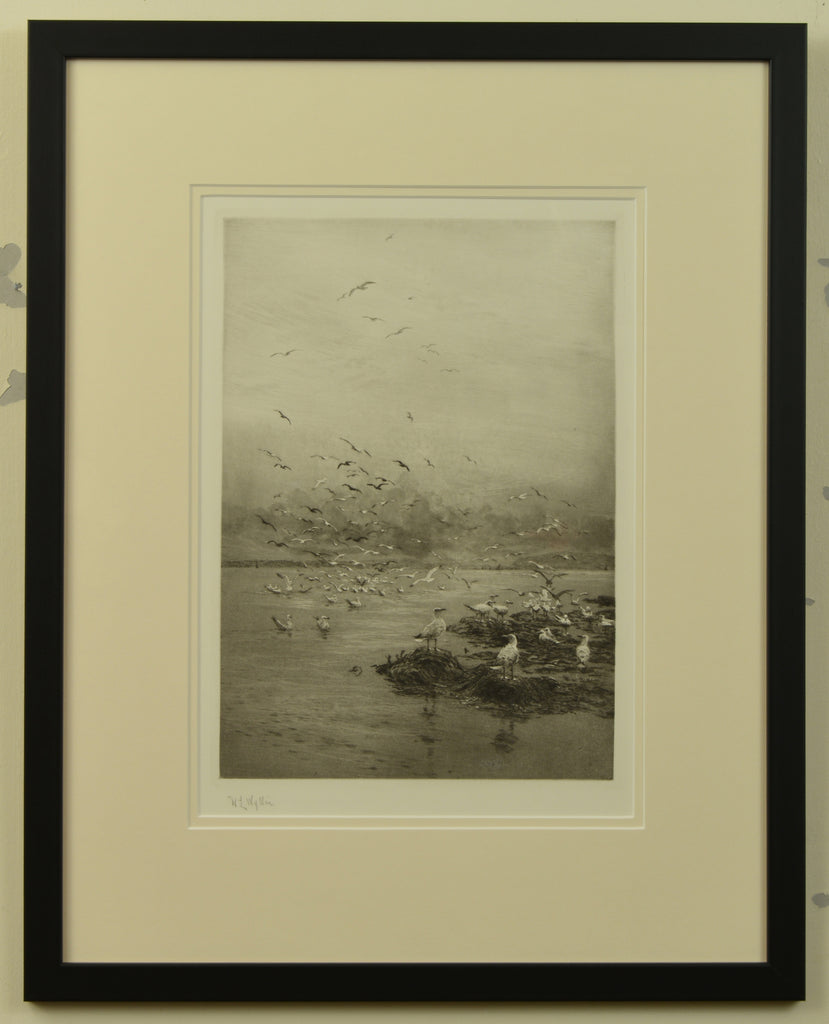 Signed etching of seagulls by W.L. Wyllie