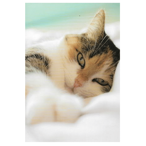 Cat Birthday Greeting Card - Cotswold Jewellery