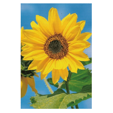 Sunflower Blank Card - Cotswold Jewellery