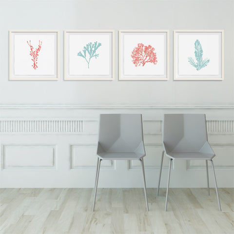 Sea Flora Collection - Colored