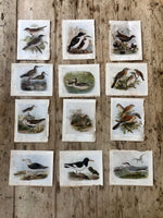 Load image into Gallery viewer, Double Sided Vintage Bird Plate Moor-Hen & Ringed Plover