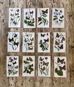 Load image into Gallery viewer, Vintage Butterfly Book Plate - Lesser Purple Emperor (No.12)