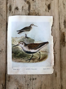 Double Sided Vintage Bird Plate Woodcock & Dunlin