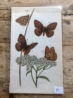 Load image into Gallery viewer, Vintage Butterfly Book Plate - Silver-washed Fritillary (No.37)