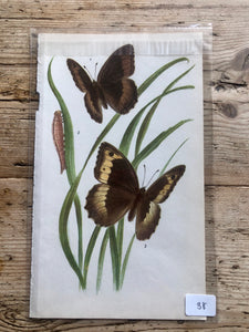 Vintage Butterfly Book Plate - Meadow Brown (No.38)