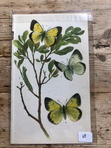 Vintage Butterfly Book Plate - Clouded Yellow (No.48)