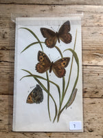Load image into Gallery viewer, Vintage Butterfly Book Plate - Hermit (No.7)