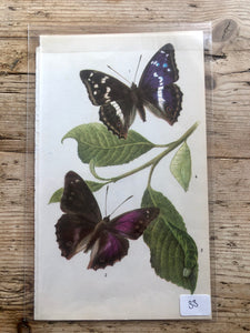 Vintage Butterfly Book Plate - Common Gilder (No.33)