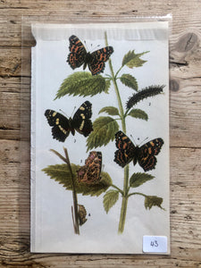 Vintage Butterfly Book Plate - Red Admiral (No.43)