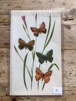 Load image into Gallery viewer, Vintage Butterfly Book Plate - Small Copper (No.15)