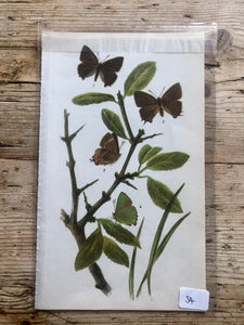 Vintage Butterfly Book Plate - Scarce Copper (No.34)