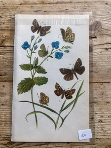 Vintage Butterfly Book Plate  (No.24)