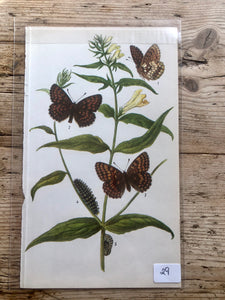 Vintage Butterfly Book Plate - Small Pearl-bordered Fritillary (No.29)