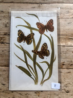 Load image into Gallery viewer, Vintage Butterfly Book Plate - Wall Brown (No.8)