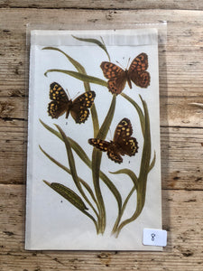 Vintage Butterfly Book Plate - Wall Brown (No.8)