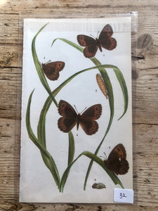 Vintage Butterfly Book Plate - Purple Hairstreak (No.32)
