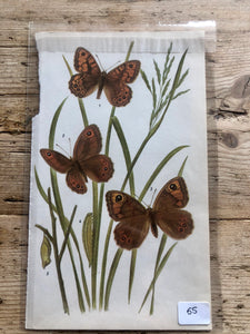 Vintage Butterfly Book Plate - Marbled White (No.55)