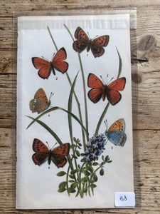 Vintage Butterfly Book Plate - Purple-edged Copper (No.53)