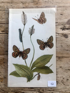 Vintage Butterfly Book Plate - Spotted Fritillary (No.52)