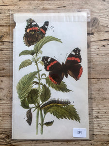 Vintage Butterfly Book Plate - Painted Lady (No.59)