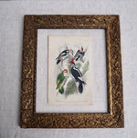 Load image into Gallery viewer, Antique Bird Plate - No 57