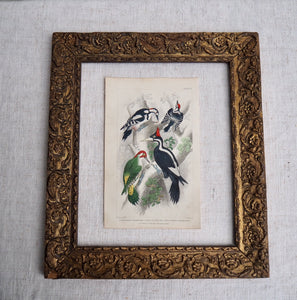 Antique Bird Plate - No 57
