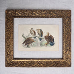 Load image into Gallery viewer, Antique Bird Plate - No 49