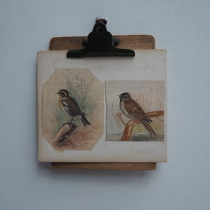 Edwardian Watercolour of Birds