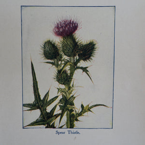 Spear Thistle Vintage Book Plate