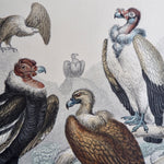Load image into Gallery viewer, Antique Bird Plate - No 51