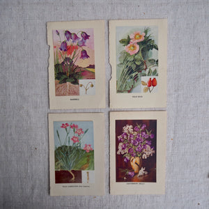 Harebell Vintage Book Plate