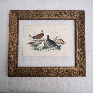 Antique Bird Plate - No 56