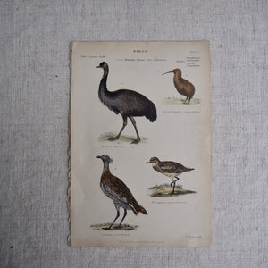 Antique Bird Plate - No 22