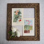 Load image into Gallery viewer, Wild Carnation Vintage Book Plate