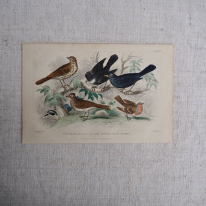Antique Bird Plate - No 58