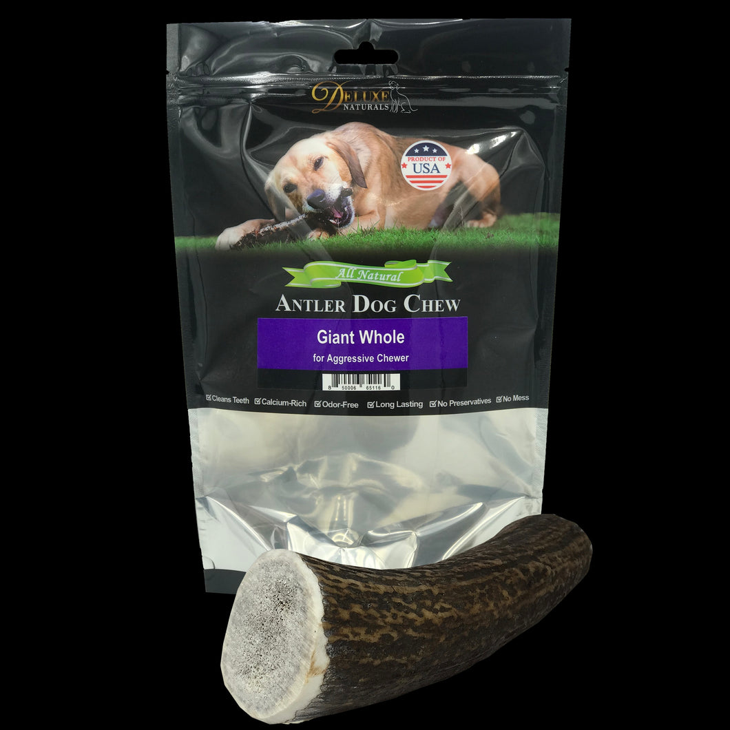 Elk Antler Dog Chew - Giant Whole
