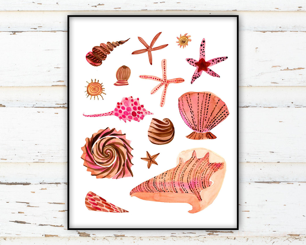Seashell Collection by Sara Franklin