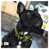 french bulldog in green crushed velvet collar and bowtie