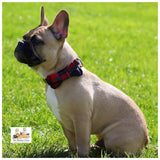 french bulldog navy red & green tartan collar and bowtie