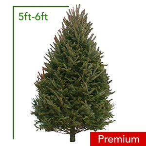 5ft-6ft Premium Balsam Fir Christmas Tree