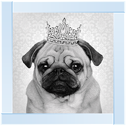 Pug with Crown Artwork