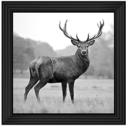 Antler Stag 85 x 85 (BL)