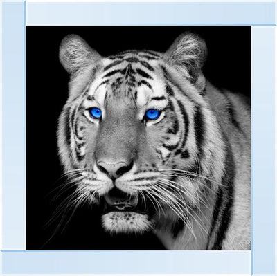 Tiger with Blue Eyes Artwork