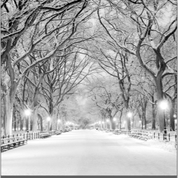 Central Park Snow 85 x 85 Artwork