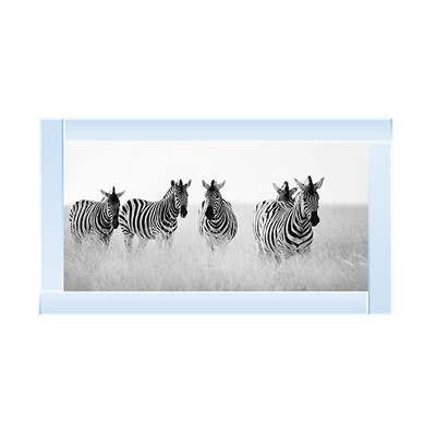 Zebras in Field Artwork